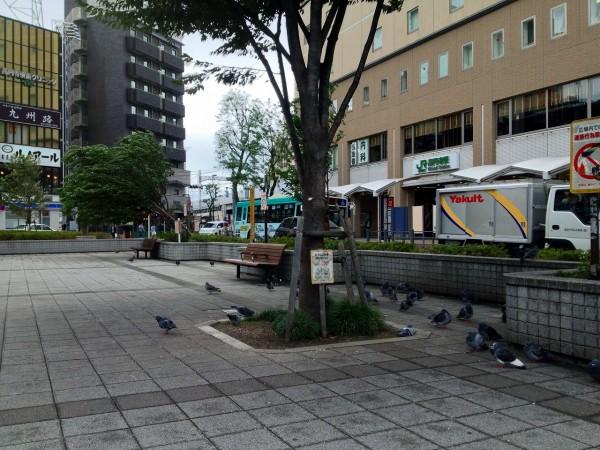 北口広場のハトたち