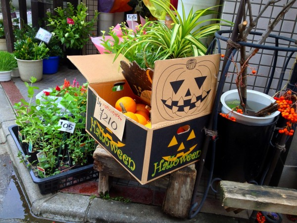 花のゼフィールさんのハロウィンかぼちゃ